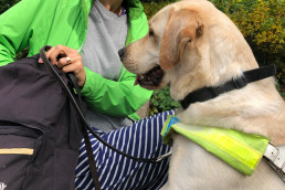guide dog looking into a bag for treats